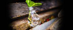 Gestión ambiental Ecosustenta Minatitlan