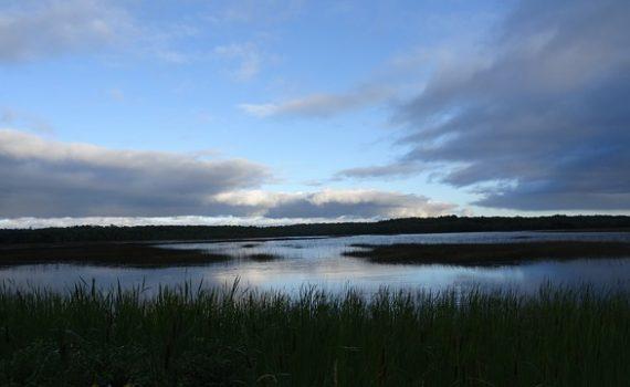 Pantano de las matas Ecosustenta Gestión Ambiental Minatitlan y zona sur